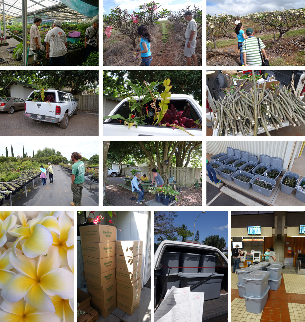 モロカイ島のプルメリア農園イメージ