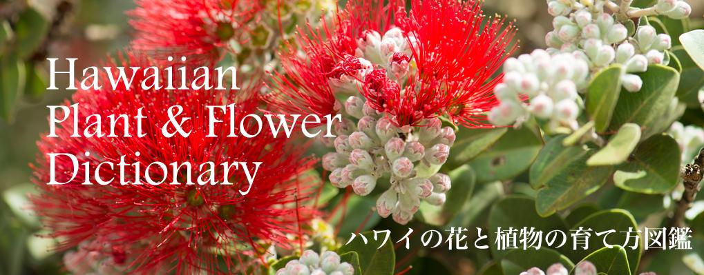 ハワイの花と植物の育て方図鑑
